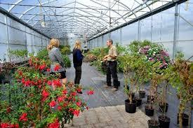 the butchart gardens garden days greenhouse tours