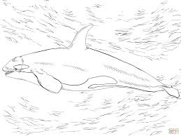 Small Picture Killer Whale Orca Coloring Page Within Coloring Pages glumme
