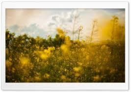 summer outdoors wallpaper. Outdoors HD Wide Wallpaper For 4K UHD Widescreen Desktop \u0026 Smartphone Summer S