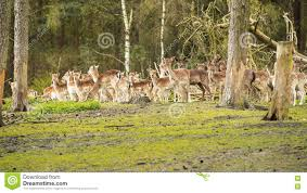image of animals in the woods के लिए चित्र परिणाम