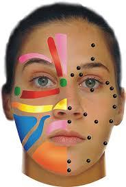 Cogent Reflexology Of The Face Chart Reflexology