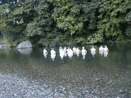「五十鈴川」の画像検索結果