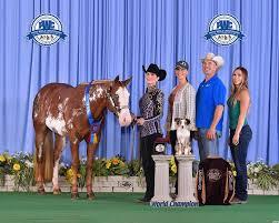 BIG congratulations to Margarita... - Gibbs Show Horses   Facebook