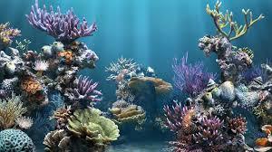 fish tank wallpapers. Wonderful Tank HD Aquarium Backgrounds 1080p To Fish Tank Wallpapers
