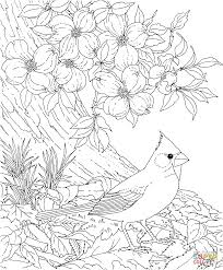 Coloring Pages Birds Northern Cardinal Free 10281248 Attachment
