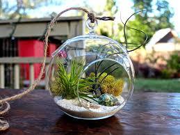 Hanging Terrarium Bubble Glass Air Plant Containers Pots For Terrace Garden  House Design Ideas