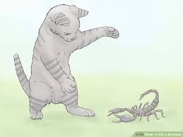 how do you kill a scorpion. Perfect Scorpion Image Titled Kill A Scorpion Step 6 Throughout How Do You A M
