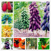 Compare prices on <b>Papaya</b> Shipping - shop the best value of ...