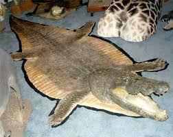 animal fur rugs real hide info faux skin australia white
