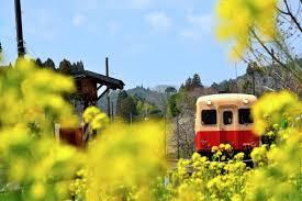「千葉県 菜の花フリー素材」の画像検索結果