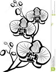 рисунок орхидеи поиск в Google разное орхидеи цветы трафареты