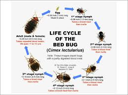 Bed Bug Facts Know Them All Bed Bug Guide