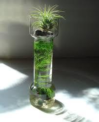 land and sea air plant and marimo moss ball nano myzen on marimo moss ball