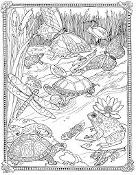 Small Picture Jan Brett Free Mossy Coloring Page Lily pad Pond so pretty