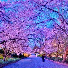 someday i will walk under the soul blossom tree with my hand eternally woven in