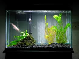 Funny Fish Tank Decorations The Ecology Of The Aquarium And How It Led Me To Permaculture