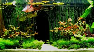 Cool Aquariums Fish Tank Ideas Feel Free To Use And Share These Tropical