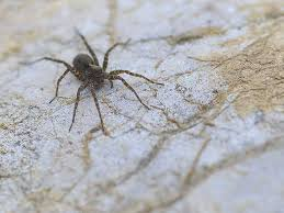 Usa Spider Bite Chart Wolf Spider Bite Pictures Treatment Symptoms And More