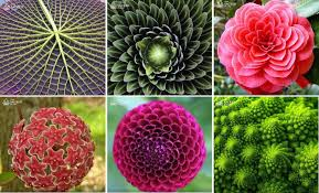 a guide to the spiritual meaning of plants