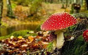 Mushroom 3d Live Wallpaper - Mushroom ...