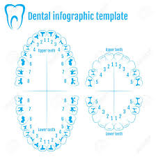 Child Teeth Numbers Wiring Schematic Diagram 14 Pokesoku Co