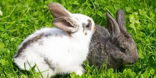 Bildergebnis für kaninchen