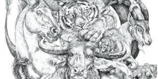 Good Animals To Draw Eunacal Org