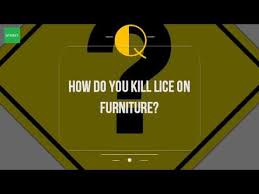 How Do You Kill Lice Furniture