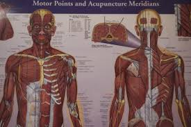 Understanding The Acupuncture Meridian Model Acupuncture