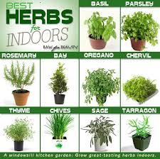 herb list for my herb garden