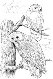 Two Owls On Tree Coloring Page