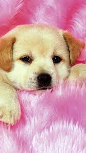 Puppy Wallpapers - Top Free Puppy ...