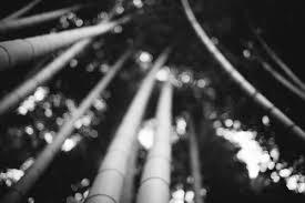 写真朝活のススメ 渡月橋 竹林の小径 嵐山モンキーパーク