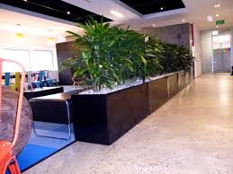 office planter boxes. rhapis palms create a lush room divider office planter boxes