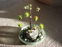 Air Plant Display Use Air Plants As Art Crafthubs Air Plants Pinterest Air