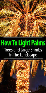Palm Tree Lights Solar Lighting Palm Trees Illuminate Palms Trees And Shrubs How To