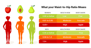 Waist To Hip Ratio How To Calculate 6 Abdominal Exercises