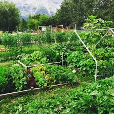 community gardening. Welcome To Canmore Community Gardening A