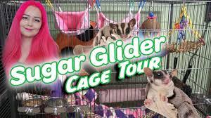sugar glider cage tour safe toys