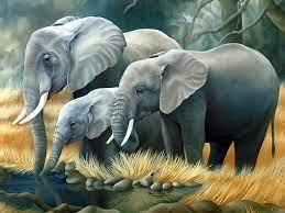 Elephant pictures, Elephant wallpaper ...