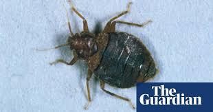Get Black Beetle Bed Bugs Images