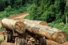 Usaha kehutanan juga penting untuk menjaga keseimbangan alam. Tantangan Inovasi Pemanenan Hasil Hutan