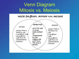 Comparing Mitosis And Meiosis Venn Diagram Mitosis Vs Meiosis Venn Diagram Printable 41 Wiring Diagram Images