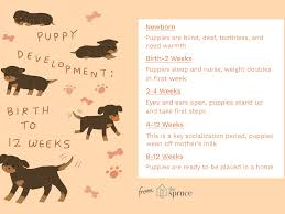 Puppy Age Chart Puppy Development From 1 To 8 Weeks
