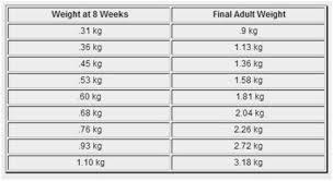 Chihuahua Weight Chart In Kg Kitten Size Chart Bedowntowndaytona Com