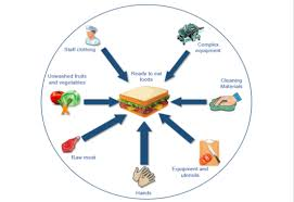 Cross Contamination Fsa Wants Views On E Coli O157 Guidance Revision Food Safety News