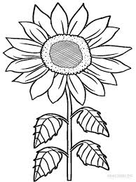 Small Picture Sunflower coloring pages Download and print Sunflower coloring pages