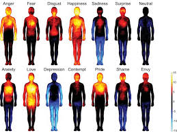 Human Emotions Chart Different Emotional States Manifest In Different Spots In