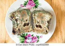 White Mold On Bread Bangladeshclubclub