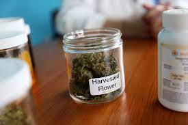 Medical marijuana: In Wisconsin research, the law aren't on patients side